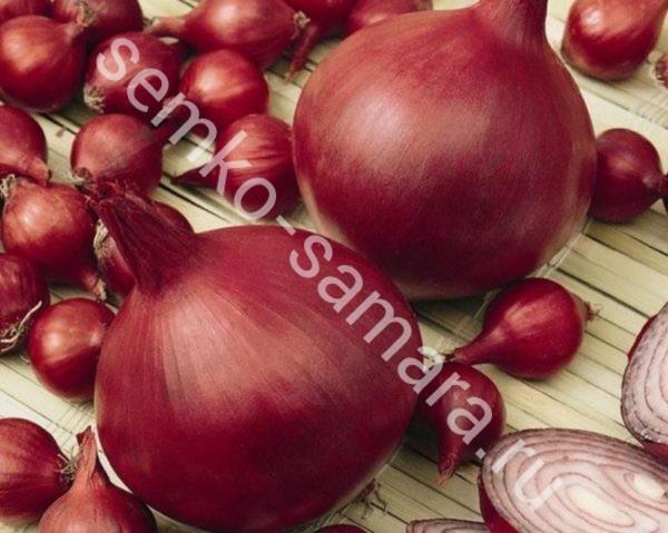 Лук репчатый Ред Барон, Бейо-семена, Нидерланды, 250.000сем.