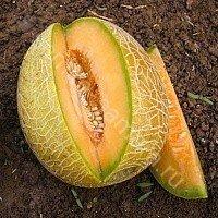 ДЫНЯ БИЗАН F1 - семена