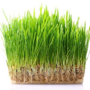 Травы и газоны
