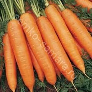 Морковь Олимпус Семко-самара