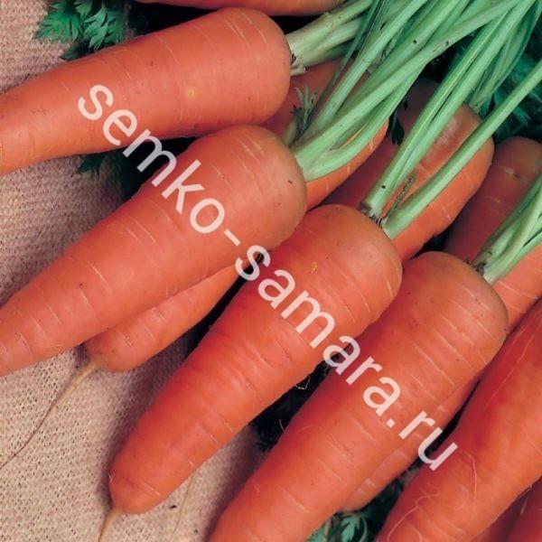 Морковь Шантенэ Королевская