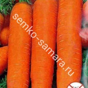 Морковь Нантик Резистафлай F1