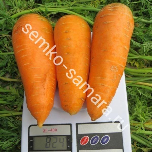 морковь болтекс семко-самара