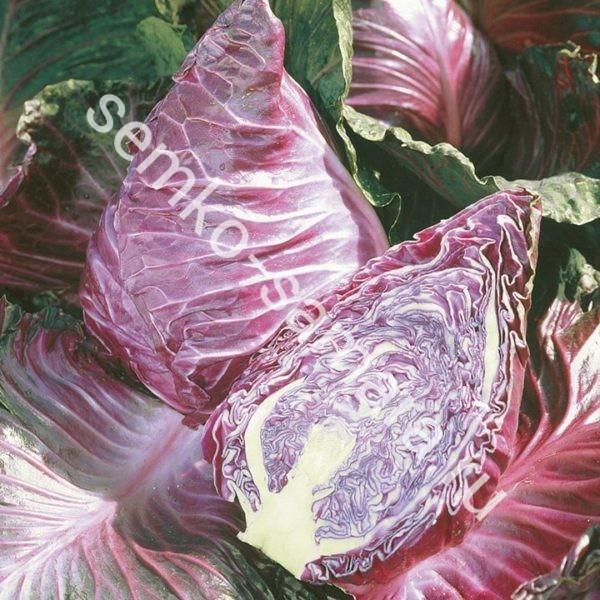 Капуста Калибос пакетированные семена