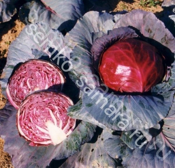 Капуста Примеро F1 пакетированные семена