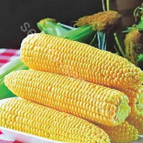Кукуруза Спирит F1 (сахарная)