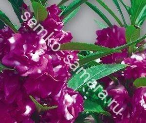 Бальзамин Том Самб фиолетовый