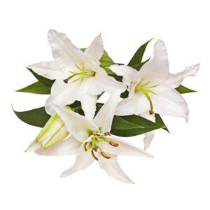 Лилии видовые