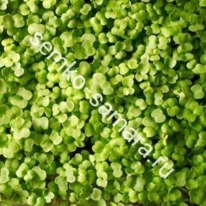 Рукола Рококо микрозелень