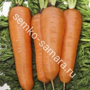 Морковь Курода Шантанэ