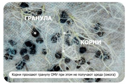корни и гранула ОМУ