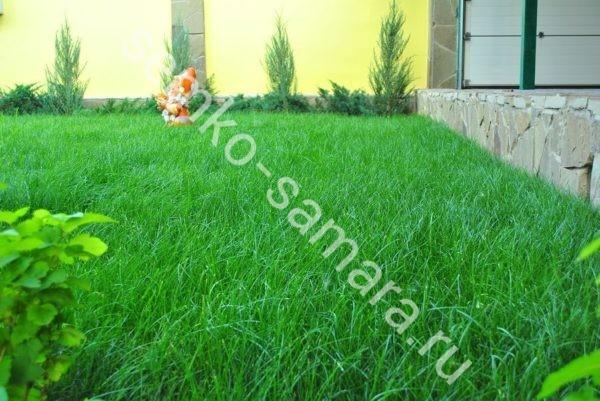 Газонная трава Без забот