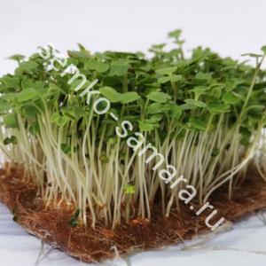 Руккола Рококо микрозелень